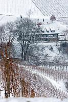 Europe/Allemagne/Bade-Würrtemberg/Forêt Noire/Durbach: Paysage du vignoble  de Durbach vu depuis le Château; Staufenberg