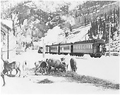 Passenger train leaving Ouray for Montrose with sheep in foreground.<br /> D&amp;RGW  Ouray, CO
