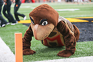 College Park, MD - November 26, 2016: Maryland Terrapins mascots doing pushups after a touchdown during game between Rutgers and Maryland at  Capital One Field at Maryland Stadium in College Park, MD.  (Photo by Elliott Brown/Media Images International)