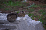 the cats in cat forum in rome are taken care of and fed by volunteers in rome italy