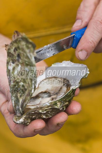 Europe/France/Bretagne/22/Côtes d'Armor/ Paimpol:Ouverture d'une huître de bretagne-Entreprise: André Arin