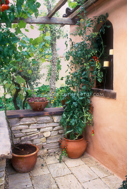 Elegant Cherry Tomatoes Vegetables Growing In Pot On Patio In Mediterranean Style  Italianate Garden And House,