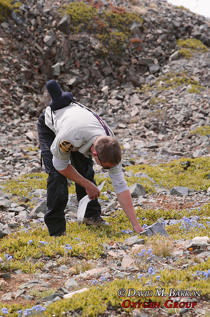 Scott Collecting Plants