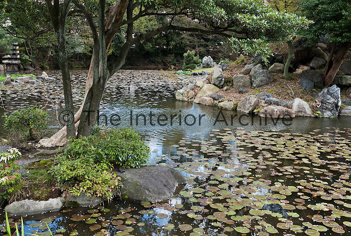Water lillies cover the surface of the lake at Shosei-en garden