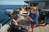 Occidental College students examine sea life as part of a class on marine biology on February 26, 2013. The class, taught by Professor Dan Pondella, takes frequent field trips along the California coast, near Los Angeles. (Photo by Marc Campos, Occidental College Staff Photographer)