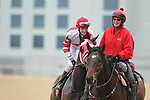 February 17, 2020: Whoa Nellie (6) with jockey Joseph Rocco Jr. aboard before the Bayakoa Stakes at Oaklawn Racing Casino Resort in Hot Springs, Arkansas on Feburary 17, 2020. Justin Manning/Eclipse Sportswire/CSM