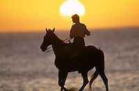 Horsebackriding on the ocean shore against a golden sunset on the north shore of Hawaii.