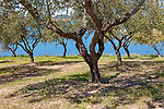 Ok tress on bank of reservoir lake at Mourao, Alentejo Central, Evora district, Portugal, southern Europe developed as a tourism attraction by the Portuguese government