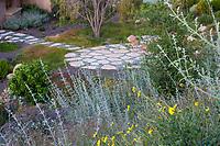 Salvia apiana, White sage in summer-dry, drought tolerant mixed border on hillside overlookiing bckyard patio, Schaff garden