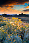 Sunset light over Rabbitbrush on the high desert plateau along the Kolob Terrace, near Zion National Park, Utah