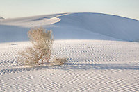 Lone plant among the gypsum dunes at White Sands National Monument in New Mexico.