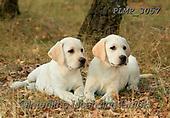 Marek, ANIMALS, REALISTISCHE TIERE, ANIMALES REALISTICOS, dogs, photos+++++,PLMP3057,#a#, EVERYDAY