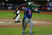 BARRANQUILLA – COLOMBIA, 10-12-2019: Mascota de Caimanes durante partido entre Gigantes de Barranquilla y Caimanes de Barranquilla como parte de La Liga Profesional de Béisbol Colombiano 2019/2020 jugado en el estadio Edgar Renteria de Barranquilla. / Pet of Caimanes during match between Gigantes de Barranquilla and Caimanes de Barranquilla as part of Colombian Professional Baseball League 2019/2020 played at Edgar Renteria stadium in Barranquilla city. Photo: VizzorImage / Alfonso Cervantes / Cont