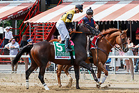 Seven Trumpets in the post parade as Promises Fulfilled (no. 1) wins the Allen Jerkens  Stakes (Grade 1), Aug. 25, 2018 at the Saratoga Race Course, Saratoga Springs, NY.  Ridden by  Luis Saez, and trained by Dale Romans, Promises Fulfilled finished 1 1/4 lengths in front of Seven Trumpets (No. 5).  (Bruce Dudek/Eclipse Sportswire)