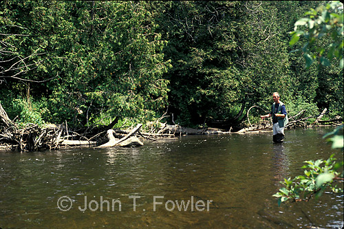 Fly fishing fo rwild speckled rainbow brown trout on Credit River Ontario<br />