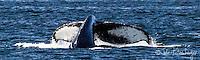 2013-10-16_WILDLIFE_Monterey Bay Whales
