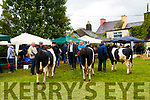 Judging at Kilgarvan Show