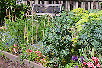 Garden bench, vegetable tomato trellis, annual begonia flowers, fence, Myosotis, Dicentra, hosta, kale intermixed all in one garden scene in edible landscape