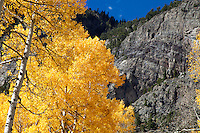 Aspen and mountainside near Crystal, Colorado