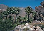 FB 77R, 5x7 postcard, Indian Canyons, Andreas Canyon