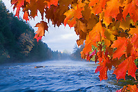 The Tahquamenon River with fall color in Tahquamenon Falls State Park near Newberry Michigan.