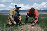 Rod Drewien and Ernie Kuyt doing a whooping crane egg transplant. Ernie Kuyt holding whooping crane egg.