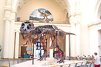 Field Museum of Natural History Sue the dinosaur. Chicago Illinois USA