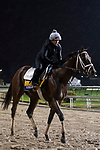 November 1, 2018: Axelrod, trained by Michael W. McCarthy, exercises in preparation for the Breeders' Cup Classic at Churchill Downs on November 1, 2018 in Louisville, Kentucky. Jamey Price/Eclipse Sportswire/CSM