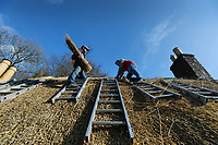 BNPS.co.uk (01202 558833)<br /> Pic: ZacharyCulpin/BNPS<br /> <br /> Pictured: Scott Symonds and thatcher Ryan Satchell (right) work on the cottage.<br /> <br /> Master thatcher Scott Symonds puts the finishing touches to the new straw roof at the former home of Victorian author Thomas Hardy.<br /> <br /> The National Trust, which owns the picturesque cottage near Dorchester, Dorset, has closed the historic property for more than a month while it undergoes vital conservation work.<br /> <br /> On the inside new structural supports have been installed and the stone floor repointed after taking a battering from thousands of visitors over the years.<br /> <br /> And on the outside the roof has been re-thatched by Scott and his dad Dave who even appeared was an extra in the 2015 film adaptation of Hardy's Far From the Madding Crowd.