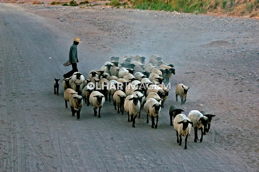 Rebanho de ovelhas no Deserto do Atacama. Chile. 2004. Foto de Maristela Colucci.