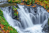 ORCG_D191 - USA, Oregon, Columbia River Gorge National Scenic Area, Emerald Falls on Gorton Creek in autumn with fallen leaves and lush vegetation.