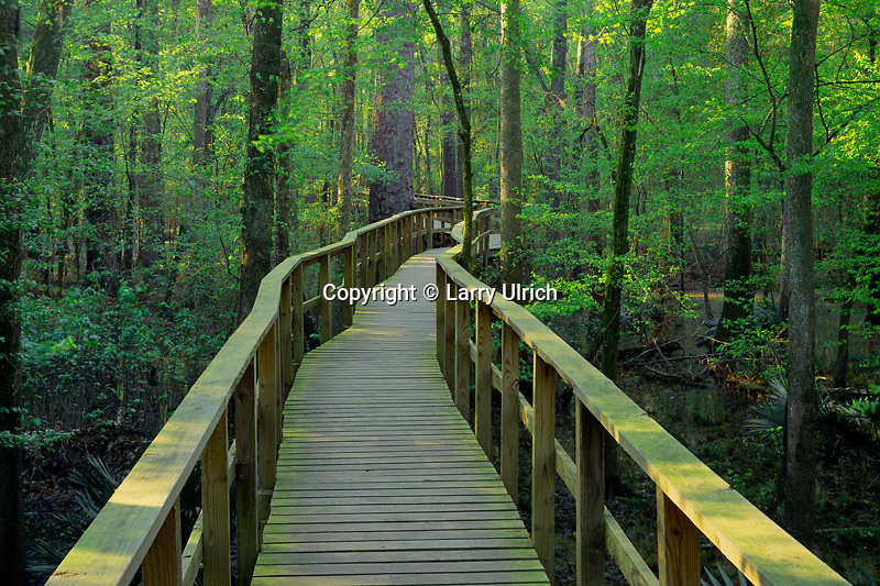 Congaree Swamp <br />