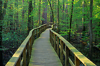 Congaree Swamp <br />   from The Boardwalk<br /> Congaree Swamp National Park<br /> South Carolina