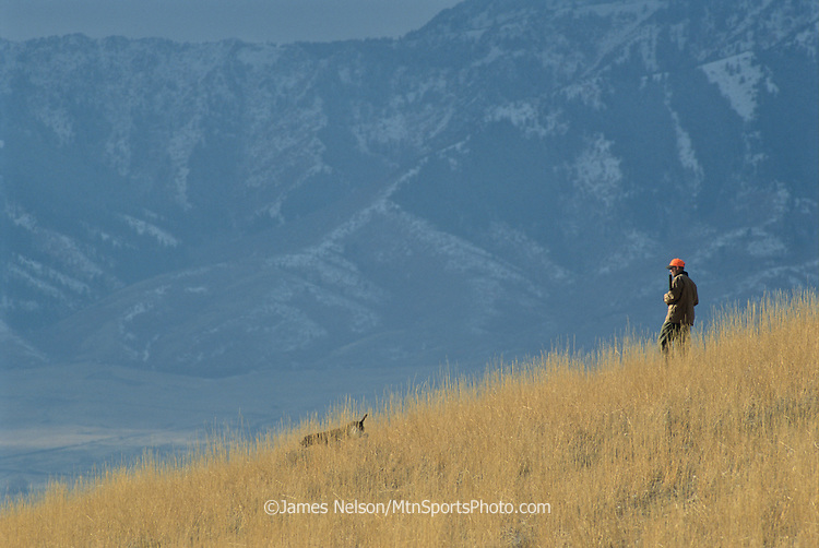 36-111. A hunter follows a German short-hair pointer along a ridge in the foothills of Utah's Wellsville Range in pursuit of Hungarian partridge.