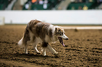 2018 Minnesota State Stock Dog Trials
