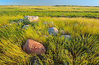 Prairie grasslands at sunrise