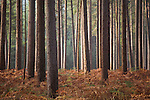 Forest trees in early morning light
