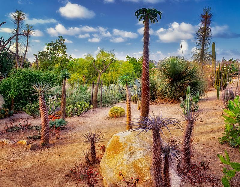 Cactus Gardens showing a variety of desert plants. Balboa Park. San Diego, California.