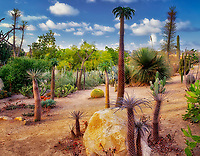 Cactus Gardens showing a variety of desert plants. Balboa Park. San Diego, California.