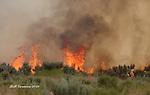 Wildfire, Washington State