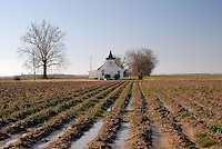 Rural Arfican American Baptist Church off Highway 61 in the Mississippi Delta part of a series of Delta winter photos.(Photo/© Suzi Altman)