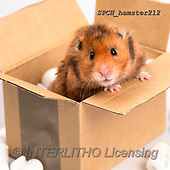 Xavier, ANIMALS, REALISTISCHE TIERE, ANIMALES REALISTICOS, photos+++++,SPCHHAMSTER212,#A#, EVERYDAY ,funny