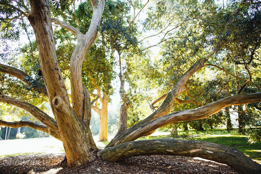 Image Ref: M276<br /> Location: Royal Botanical Gardens, Melbourne<br /> Date: 03.06.17