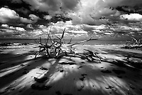 Driftwood splits the late afternoon sun on Florida's barrier islands.<br />