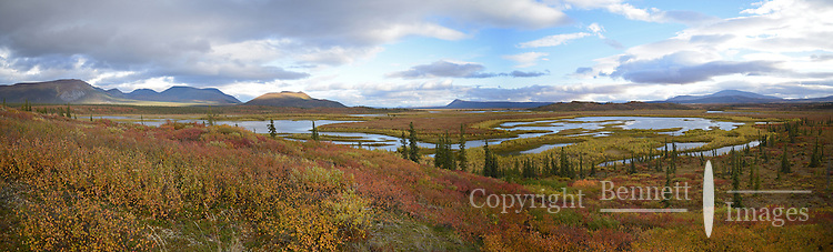Kuirzinjik Lake, named Lobo Lake by Olaus and Mardy Murie for the wolves they saw there, is located in the Brooks Range near the Sheenjek River, in Alaska's Arctic National Wildlife Refuge; it glows with fall colors on an evening in late August. STITCHED PANORAMA