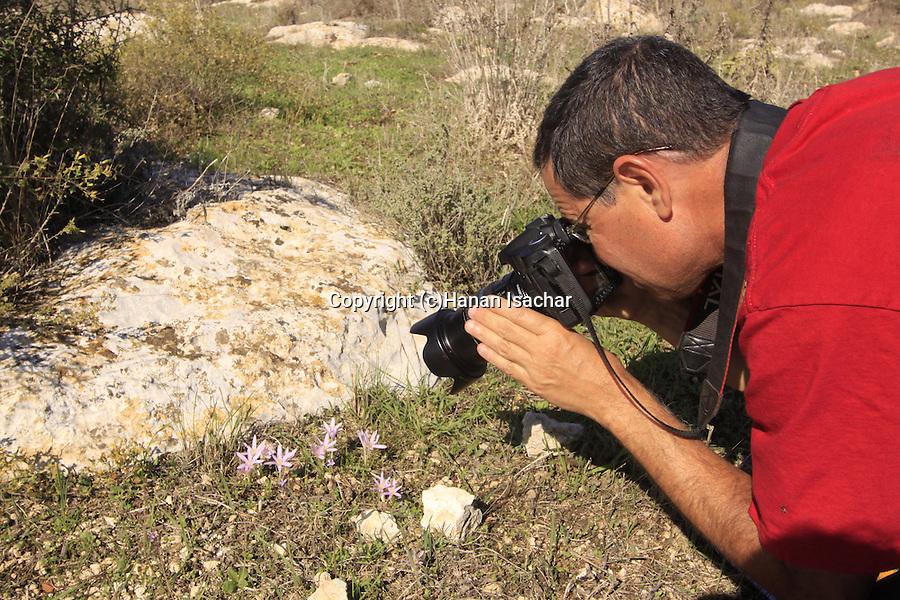 Israel, Lower Galilee, Steven's Mwadow Safron flowers in Usha