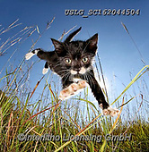 REALISTIC ANIMALS, REALISTISCHE TIERE, ANIMALES REALISTICOS, cats, paintings+++++,USLGSC162044504,#A#, EVERYDAY ,photos,fotos,pounce,cat,cats,kitten,kittens,Seth