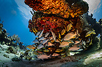 Diving in Cozumel by Lorenzo Moscia