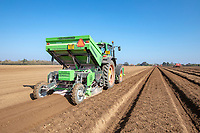 Planting potatoes - Norfolk, March