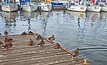 Malowniczo polozony port jachtowy w Wilkasach